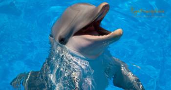 Купание с дельфинами в Испании на Коста Бланке