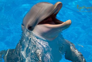 Купание с дельфинами в Испании