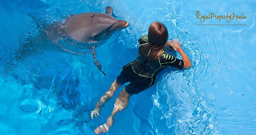 Плавание с дельфинами - Бенидорм MundoMar