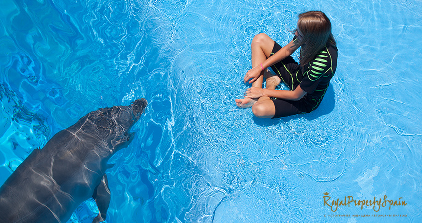 Плавание с дельфинами в Испании